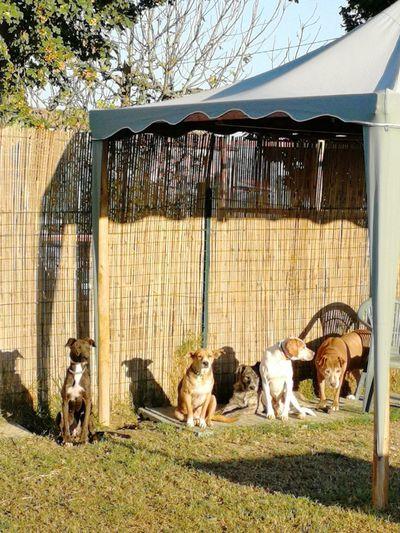 Pets Dog Bird Sunlight