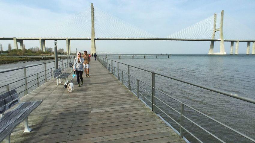 Momentwide Vasco Da Gama Bridge