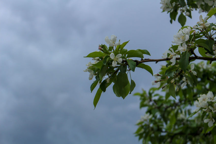 Spring thunderstorm in Gillette, Wyoming Wyoming Beauty In Nature Close-up Day Flower Flowering Plant Focus On Foreground Fragility Freshness Green Color Growth Leaf Leaves Nature No People Outdoors Plant Plant Part Purity Sky Spring Thunderstorm Tranquility Tree Vulnerability