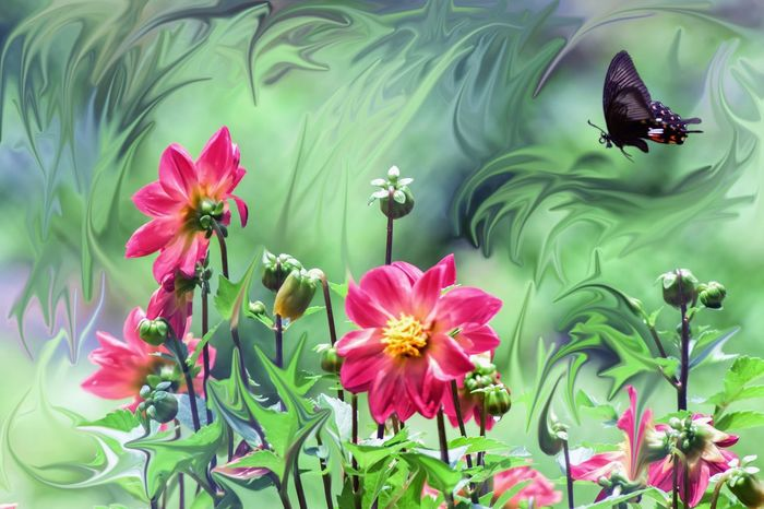 ..iF... mY... dReaMs... weRe.. a.. gaRdeN.. 🌱🌸🌱.. Togetherness My World Dreams Expression Silence Of Nature Kerala Flower Pink Color Nature Outdoors Beauty In Nature Multi Colored Beauty No People Flower Head Close-up Freshness Shades Of Winter
