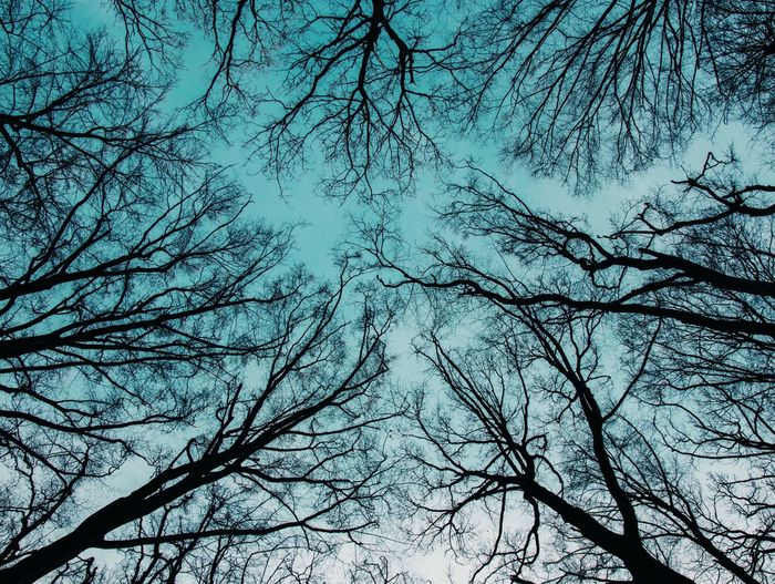 Connected With Nature Hungary Wintertime Bare Tree Beauty In Nature Connection Lookingup Low Angle View Nature Nature_collection Nature_perfection Naturelovers Network Sky Tranquil Scene Tranquility Tree Winter Trees