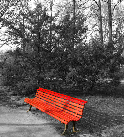 Bench Black And White Blackandwhite Colorkey Day Keycolor Nature No People Outdoors Park Red Red Bench Tree Tree Trees