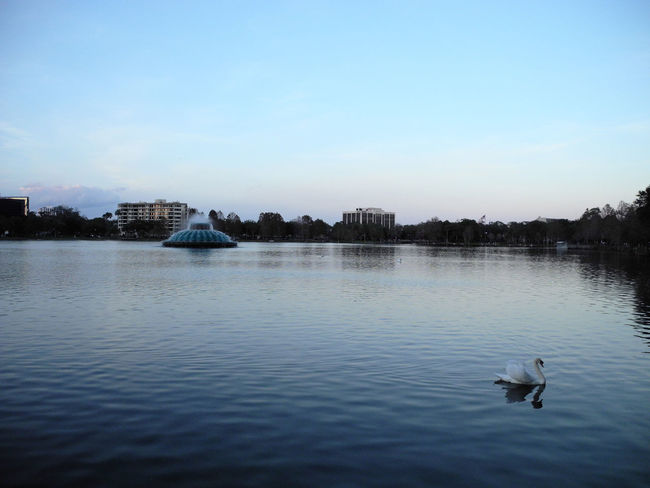 Lake Eola Park by : Leonidas Bratini Branch Built Structure City City City Life City View  Day Evening Florida Lake Eola Park, Lake, Leonidas No People Orlando Outdoors Paris Rippled River Sky Swans, Walking Around Water