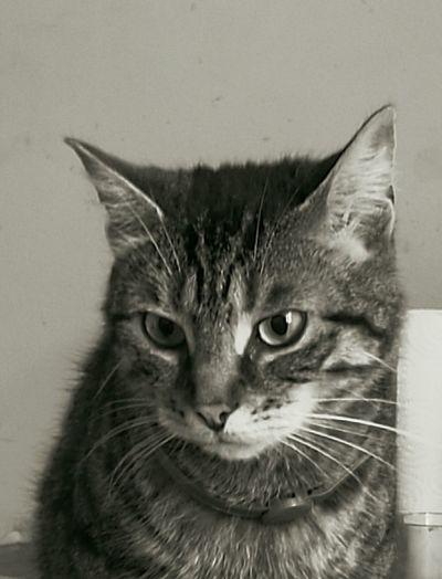 Honfleur Animals Posing P9 HuaweiP9 Catsoneyeem