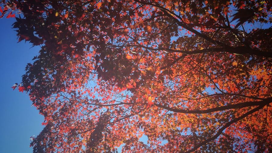 Tree Autumn Beauty In Nature Nature Outdoors Taking Photos Photography StreetLife_Award Outside Photography Outdoors Photograpghy  Interesting Perspectives Leaves🌿 Photooftheday PhonePhotography