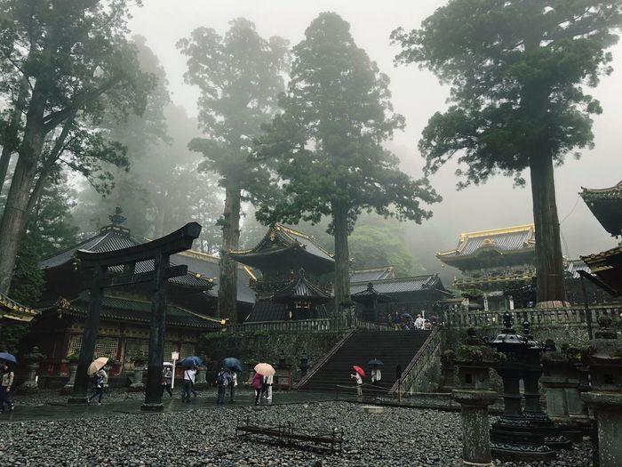 日光東照宮 Tree