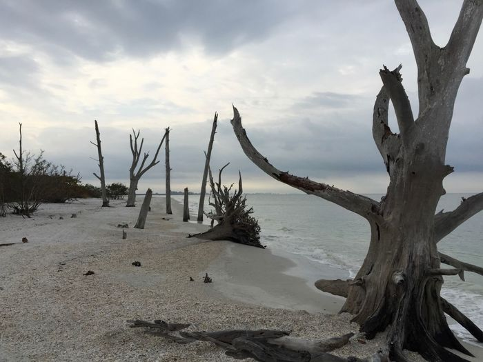 Beach Lovers Key, Florida by iPhone Beach Florida Fort Myers Beach Landscapes With WhiteWall Nature's Diversities The Photojournalist - 2016 EyeEm Awards