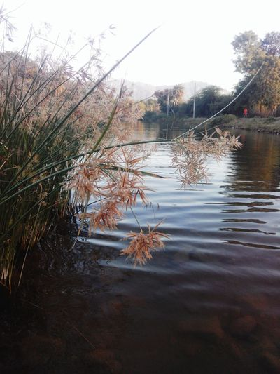 Water Nature Reflection Rajasthan Tourism Rural RuralIndia India Myyearmyview