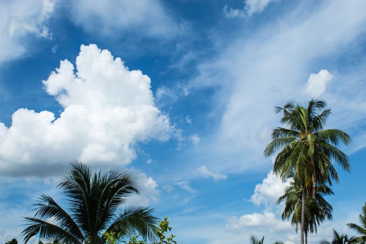 Beautiful clouds with Sun. Beauty In Nature Blue Cloud - Sky Coconut Palm Tree Day Growth Leaf Low Angle View Nature No People Non-urban Scene Outdoors Palm Leaf Palm Tree Plant Scenics - Nature Sky Tranquil Scene Tranquility Tree Tropical Climate Tropical Tree