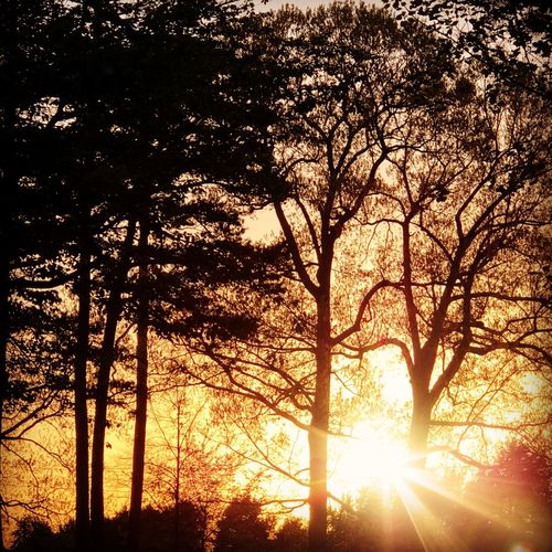Sunlight streaming through silhouette trees in forest during sunset