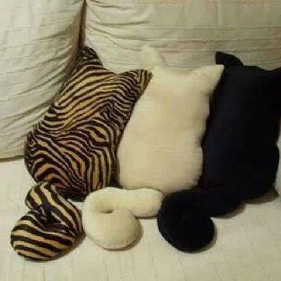 Kedi Yastıklar Cok Hoş