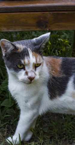 Cat Curiosity Domestic Cat Kitty Cat Love My Kitty Pets Portrait Showcase: January Taking Photos