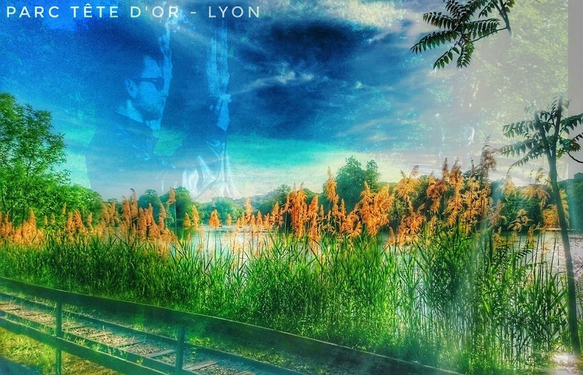 Vu Lac Outdoor Photography Relaxing Time Taking Photos Artificial Nature Parc De La Tête D'Or Lyon France