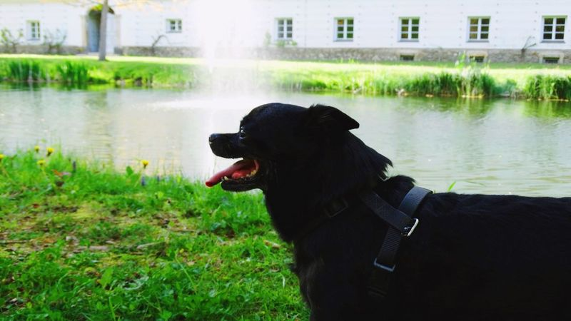 Animal Themes Architecture Black Color Building Exterior Dog Domestic Animals Grass Nature One Animal Pets Water
