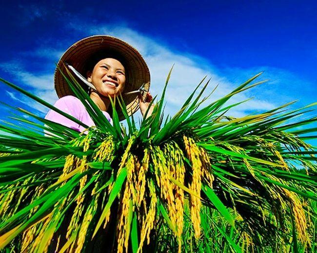 Vietnam Farmers Nonla Aobaba Mycountry