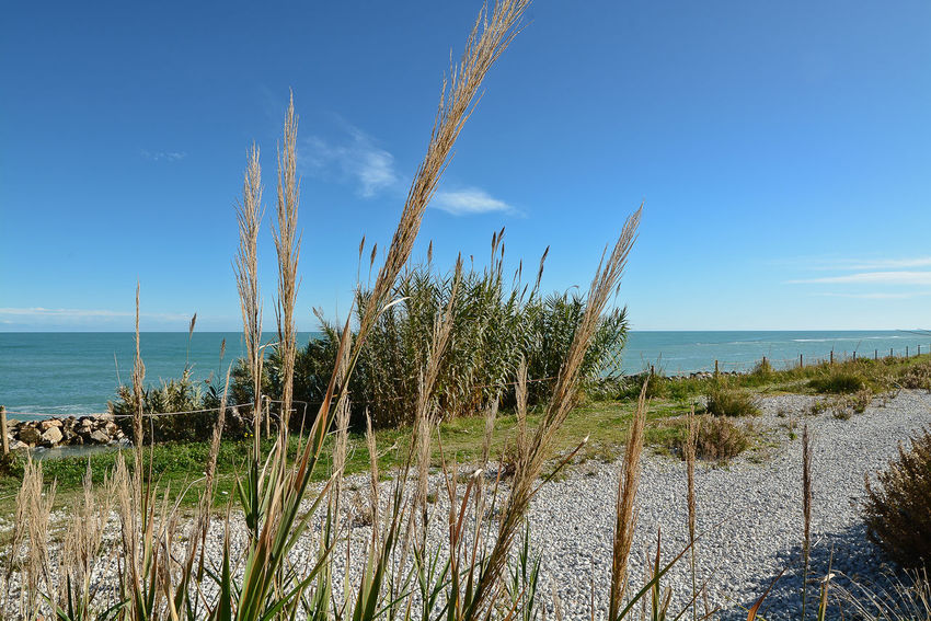 Beach Beauty In Nature Day Grass Growth Horizon Over Water Marram Grass Nature No People Outdoors Plant Sand Scenics Sea Sky Tranquil Scene Tranquility Water