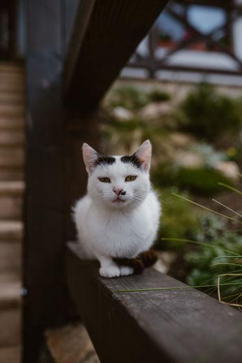 Portrait of white cat sitting on wood