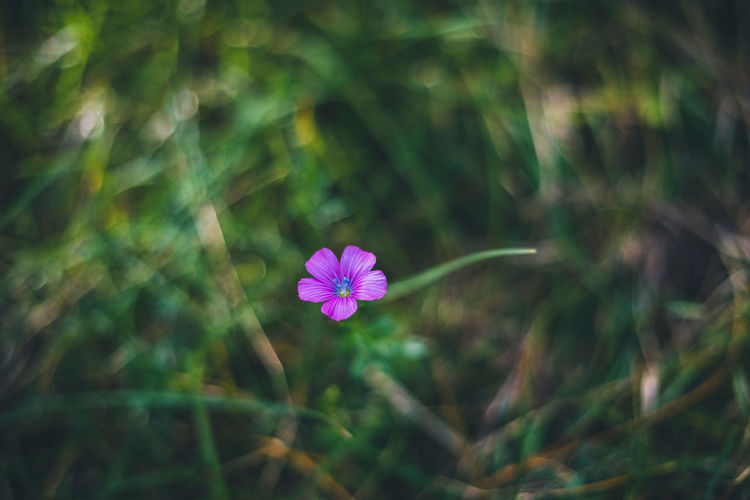 Design Blurred Single Green Bokeh Flower Background Blossom Fresh Grass Blurring Romantic Blooming Small Abstract Purple First Spring Natural Wood Best  Magical Pumila Flora Color Blur Garden Focus Closeup Forest Wild Macro Nature Close Up Violet Perfect Bloom Iris Outdoor Beauty Colorful Soft Beautiful Season  Mild Outdoors Lonely Solitude Meadow