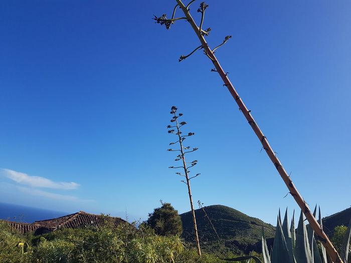 Bird Tree Blue Sky