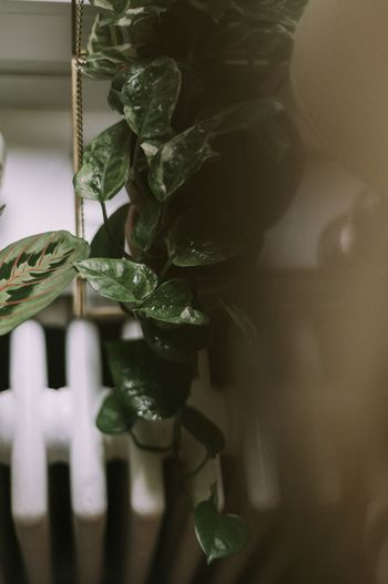 A part of my very own urban jungle 🌿 Growth Leaf Plant Hanging EyeEm Nature Lover EyeEm Best Shots EyeEmBestPics Greenery Lifestyle Photography Freshness Indoors  Home Decor Home Plants 🌱 Greenery Scenery Still Life Photography The Week On EyeEm The Week On EyeEm