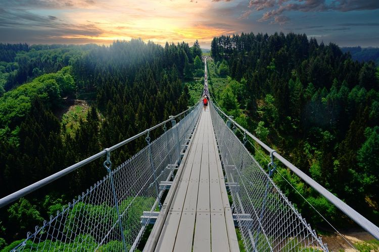 Panoramic shot of footbridge amidst plants against sky