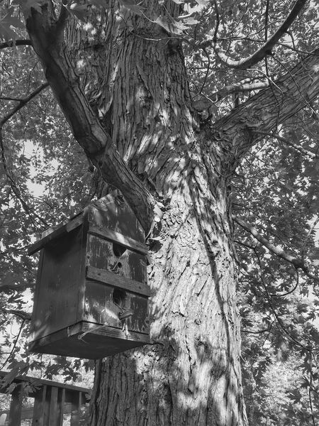Tree Tree Trunk Day Wood - Material Branch No People Outdoors Growth Low Angle View Beehive Nature APIculture Animal Themes Close-up