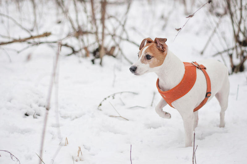 Dog on field during winter