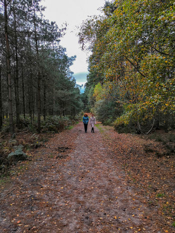 a walk in the woods Honor 10 United Kingdom Woods Woman Women Walking Tree Standing Sky Leaves Autumn Dry Leaf Wilted Plant Autumn Collection Fallen Leaf Fallen Fall Dried Plant