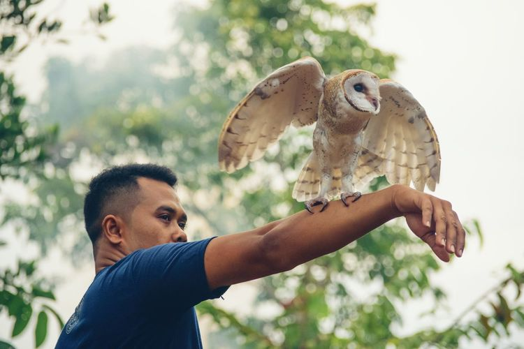Close-Up Of Man Holding Owl On Hand