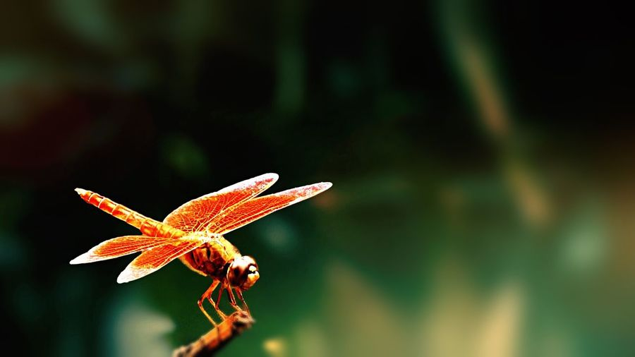 Close-up dragonfly on stem