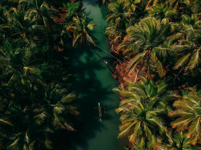 Palm jungle Boat EyeEm Best Shots EyeEmNewHere Photography ASIA Photooftheday Green Aerial View Palm Tree Dji Coconut Palm Tree Travel Drone  River Tree Water Forest Branch Sky Plant Green Color Close-up Lush - Description Leaves Tropical Tree Date Palm Tree Young Plant Greenery Leaf Palm Leaf