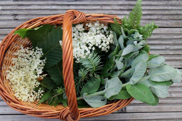 Elderflower Flowers,Plants & Garden Nature Foraging Plants Basket Mint
