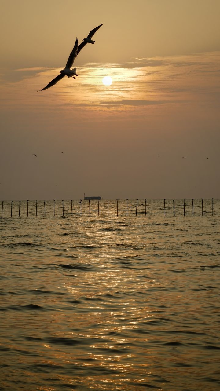 SILHOUETTE OF BIRDS FLYING OVER SEA