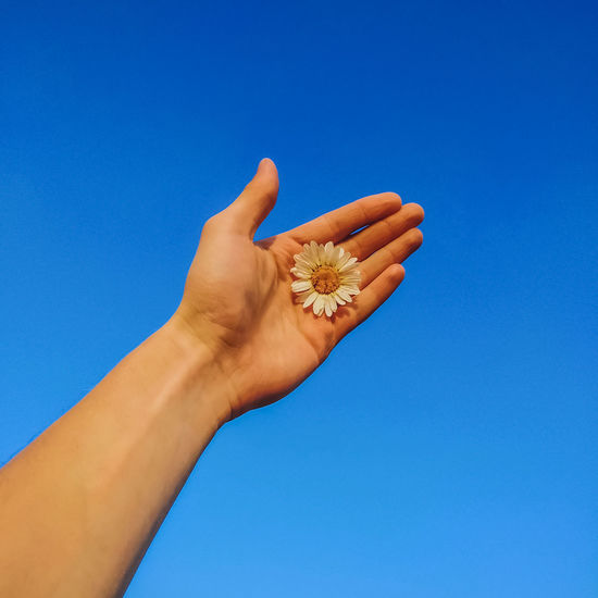 Low angle view of hand holding flower against blue sky