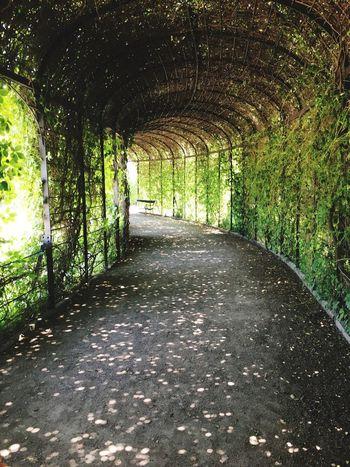 Garten Wien Bogen Pflanzen Plants Weg Way Nature Castle Schloss