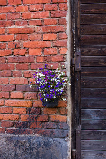 Architecture Brick Wall Building Exterior Built Structure Day Flower Fragility Freshness Growth Nature No People Outdoors Plant