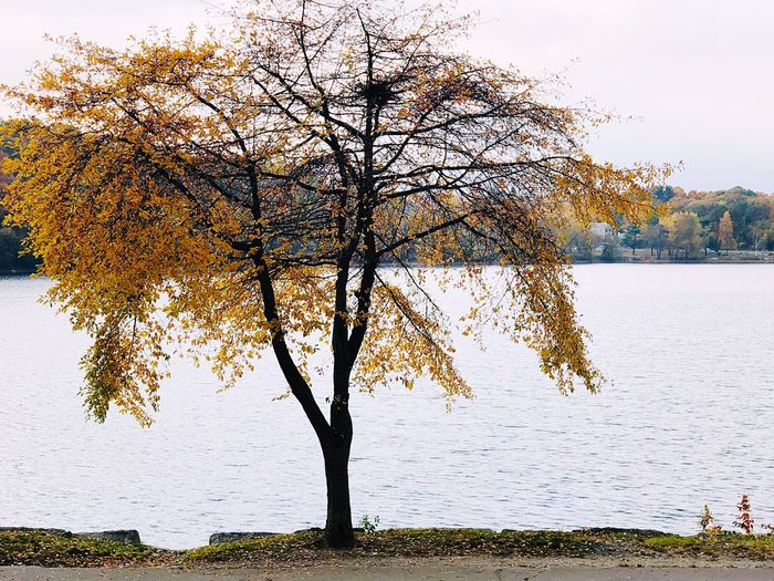 Tree by lake against sky during autumn