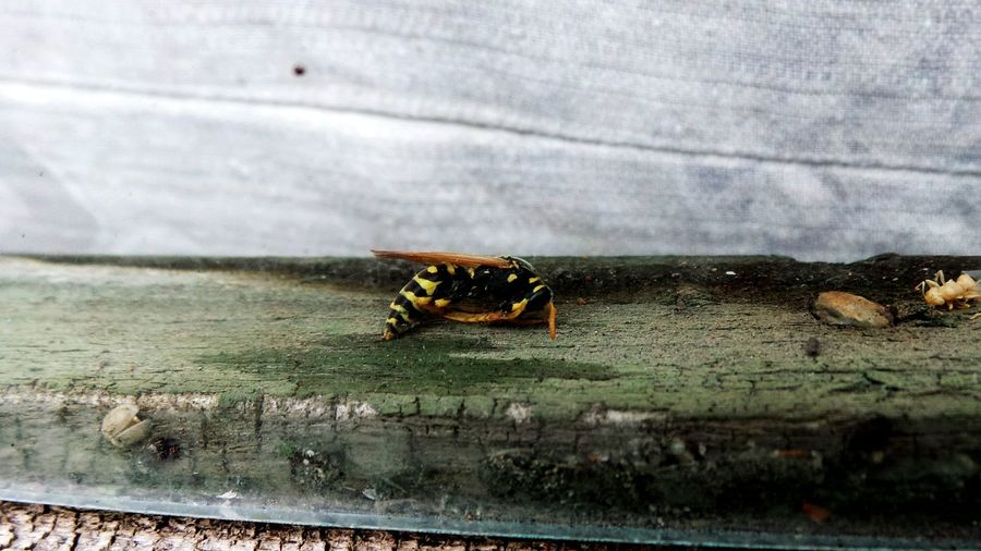No People Nature Insect Close-up Macro Beauty Insect Photography Insect Close-up Bugs Bees Wasp Window Window Frame Wood Glass Old House Invaders Must Die Invaders Dead Insect Crawlies Creepy Crawly