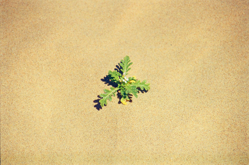 Close-up of plant against sand  background