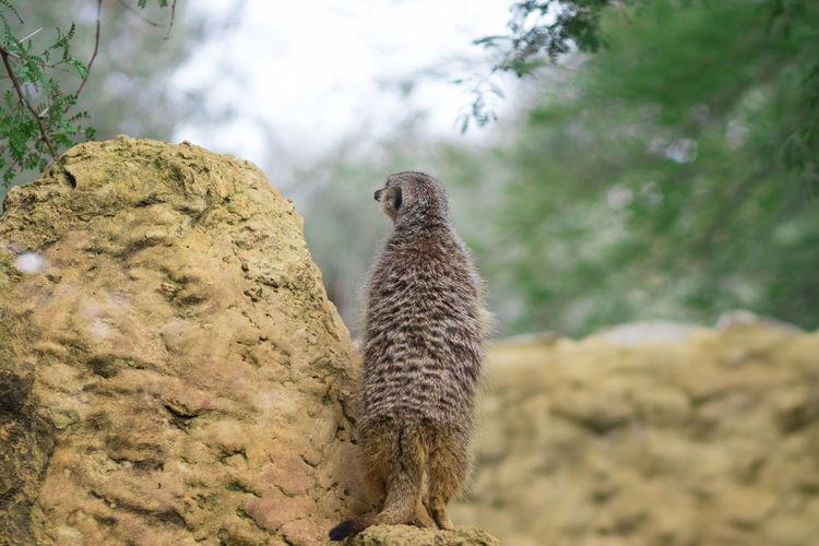 Low angle view of giraffe on rock