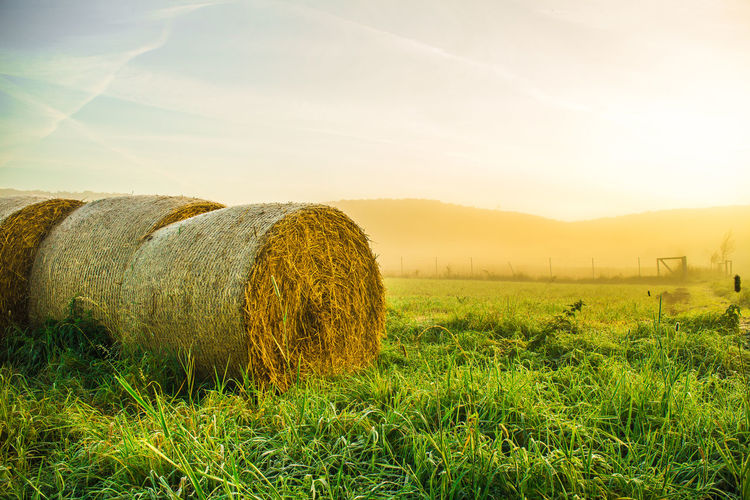 Hay Bales On Grassy Field During Sunrise