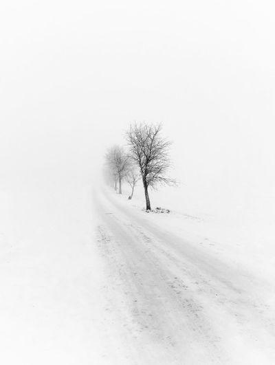 into white Snow Winter Cold Temperature Nature Landscape