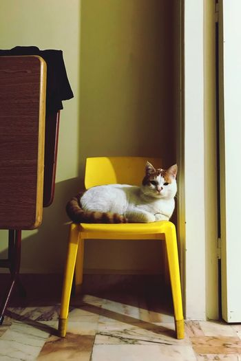 Cat sitting in yellow room