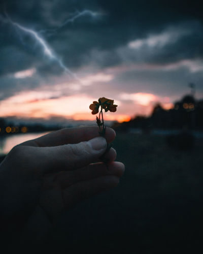Hand holding a flower during stormy sunset at lake Human Hand Hand Holding Sky Sunset Nature Human Body Part Beauty In Nature Focus On Foreground Cloud - Sky Storm Flower Thunderstorm Outdoors Flowering Plant Clouds
