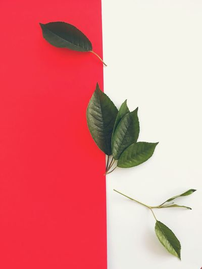 Leaf Red White