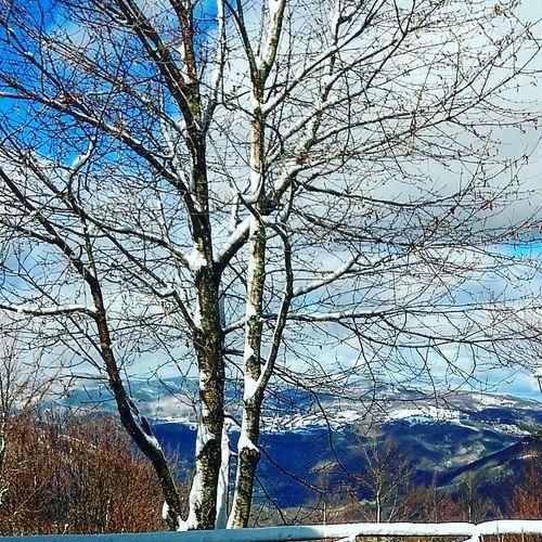Snowing Beauty