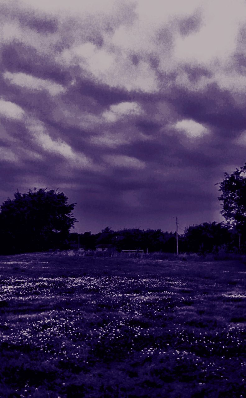 nature, tree, field, beauty in nature, cloud - sky, tranquility, agriculture, growth, sky, landscape, purple, tranquil scene, no people, scenics, outdoors, day, flower