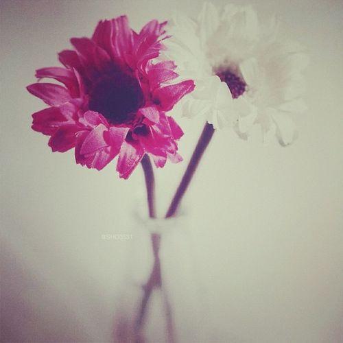 ابتسمي ولا تكترثي لأمر أحد املئي دُنياكِ حباً كأنكِ لم تُخذلي أبداً ، وتذكّري أنكِ تستحقين أن تكوني سعيدة *