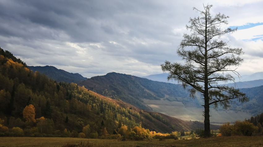 Алтай Beauty In Nature Day Landscape Mountain Nature No People Outdoors Tree