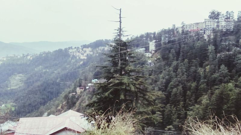 Sony Xperia Photography. Mountains Town Shimla First Eyeem Photo Tree Buildings Greenry